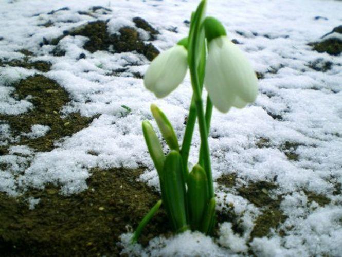 Первый месяц весны картинки